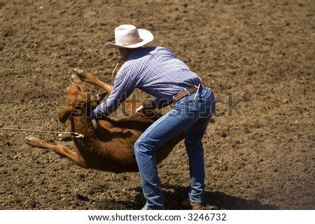 A cowboy flipping a calf in a calf roping competition. - stock photo