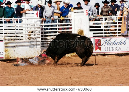 Cowboy Attacked By Brahma Bull Bull Stock Photo Safe To Use 630068