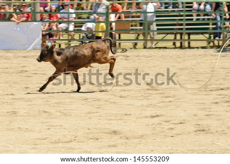 A cowboy works his rope during the calf roping competition at a small summer rodeo in Oregon - stock photo