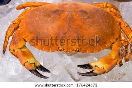 A crab for sale seen on a fishmarket