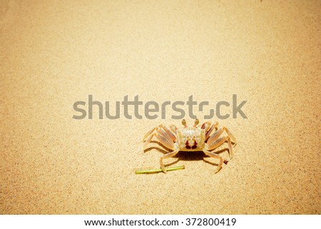 A Crab on the Beach, Vintage filter - stock photo