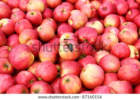 A crate full of fresh ripe apples - stock photo