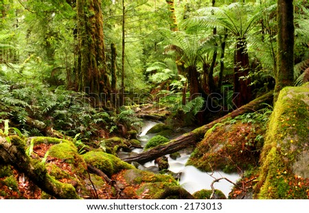 A creek flows softly through ancient temperate rainforest, with moss-covered boulders, treeferns, and myrtle beech trees.  Victoria, Australia. - stock photo
