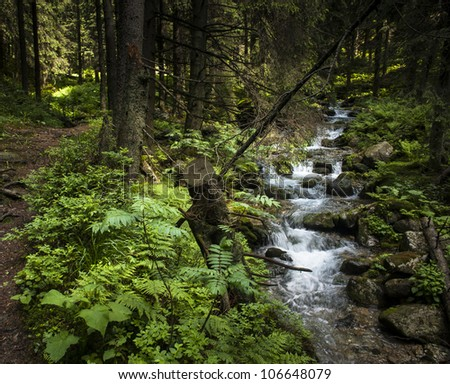 A creek in a summer forest