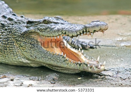 A crocodile basks in the sun with its jaws wide open - stock photo