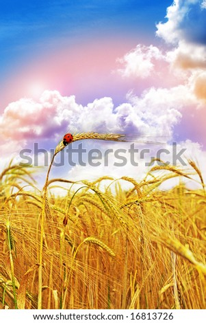 A crop of Gold found at the end of The Rainbow - stock photo