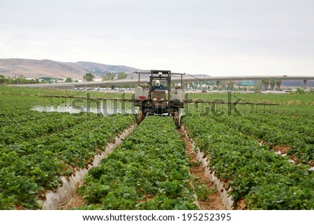 A Crop Sprayer, busy spraying Strawberry Fields with Insecticide in Orange County California. Strawberries are a vital cash crop in Southern California, they grow fast and are very tasty.  - stock photo