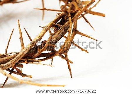 a crown of thorns on white - stock photo