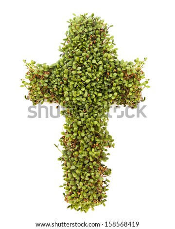 A crucifix cross isolated against a white background made of growing sprouts. - stock photo