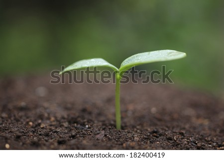 A cucumber shoot