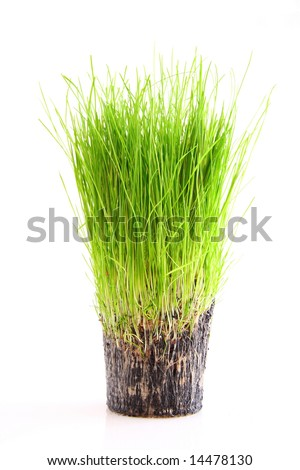 A cup of green grass and root isolated on a white background - stock photo