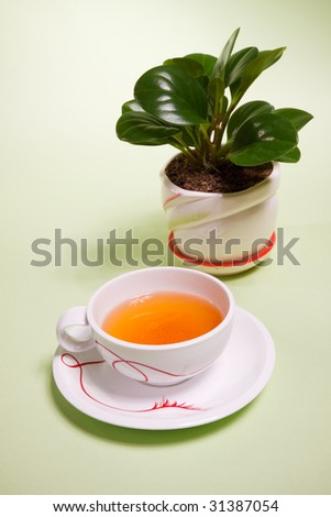 a cup of tea and plant on a background