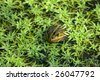 A curious frog between water-plants - stock photo