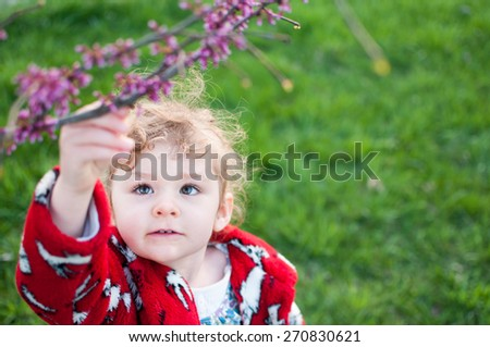 A curious little girl is reaching for the blossoms on a red bud branch which contains new purple buds.  The little girl is 2-3 years old and wearing a red and white coat. Copy space on the right side. - stock photo