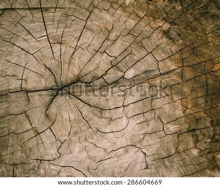 A cut tree and tree rings