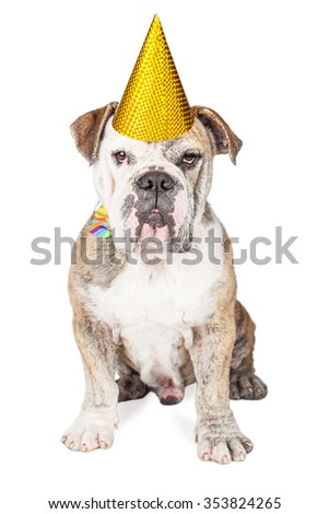 A cute and funny male bulldog wearing a yellow party hat and colorful bow tie sitting and looking straight towards the camera - stock photo
