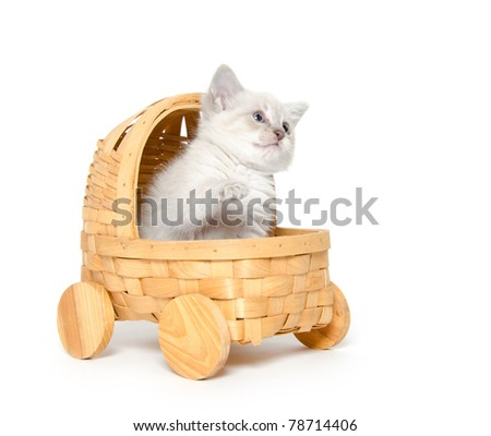 A cute baby kitten sitting inside of a toy stroller on white background