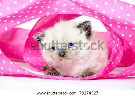 A cute baby kitten surrounded by pink ribbon with white polka dots