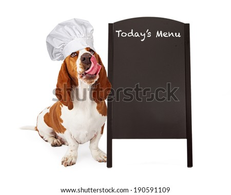 A cute Basset Hound dog wearing a chef hat while looking up and sticking his tongue out to lick his lips after eating a treat - stock photo