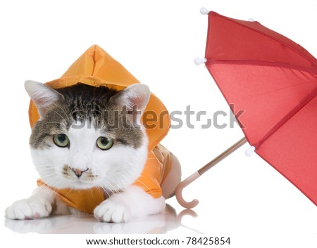 A cute brown and white cat wearing an orange raincoat. An umbrella is nearby.
