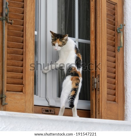 A cute calico kitten standing upright in front of a window and begs to be let in - stock photo