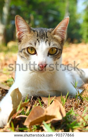 a cute cat lying on grass in the garden