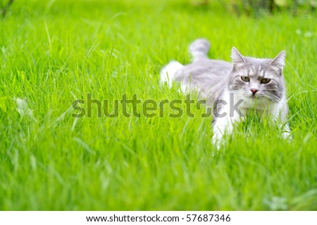 A cute cat relaxing on the grass in the garden - stock photo