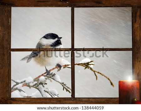 A cute chickadee in a snowstorm perched in front of a tiny farmhouse window, curious about the glowing candle burning on the windowsill.  Part of a series. - stock photo