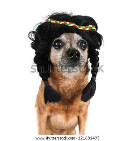 a cute chihuahua dressed as an indian - stock photo
