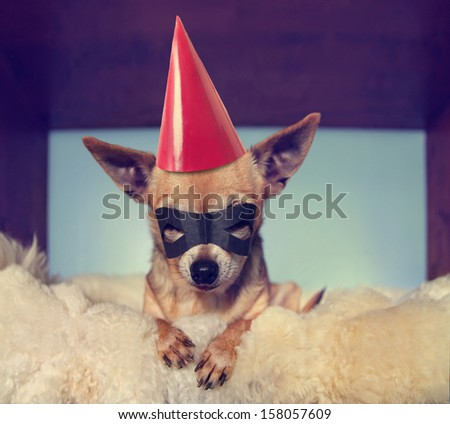 a cute  chihuahua on a blanket with a mask and a party hat on - stock photo