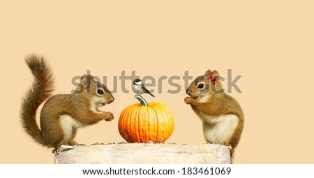 A cute couple of squirrels  are happy to see a chickadee perched on their pumpkin, looking to share seeds, in the fall. - stock photo
