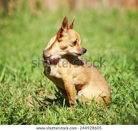 a cute dog at a local public park or a backyard - stock photo