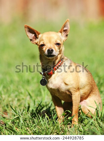 a cute dog at a local public park or a backyard - stock photo