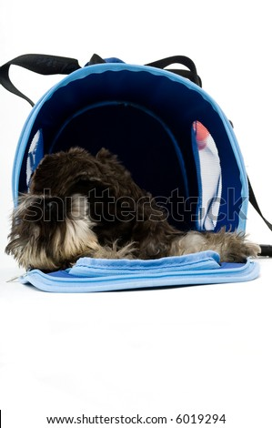 A cute dog in her bag - stock photo