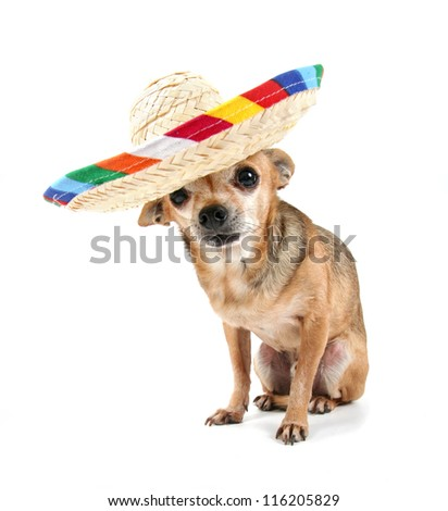 a cute dog on an isolated white background