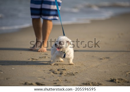 A cute Dog running on the Beach  - stock photo