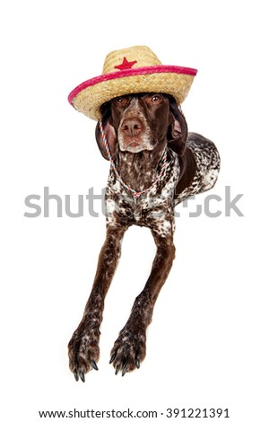 a cute dog wearing a cowboy hat - stock photo