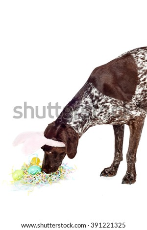 a cute dog wearing bunny ears - stock photo