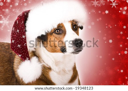 a cute dog with a christmas hat and snowflakes - stock photo