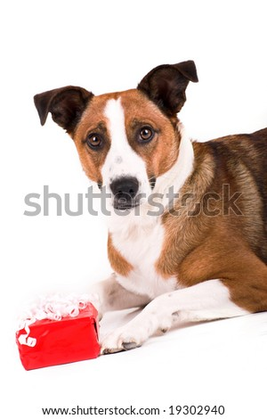 a cute dog with a red gift