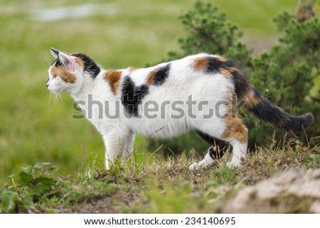 A cute domestic cat on the grass is staring at something right side. Outdoors portrait of mixed-breed cat. Color image - stock photo