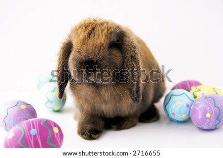 A cute easter bunny with colorful eggs - stock photo