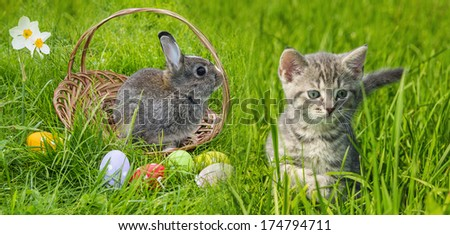 a cute easter rabbit and kitten - stock photo