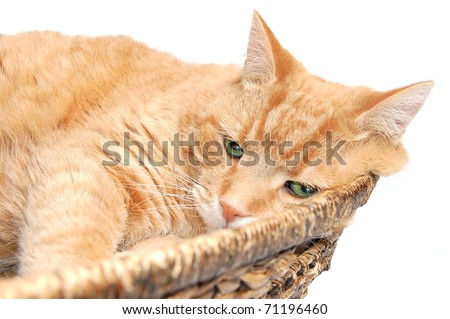 A Cute, Fat Orange Tabby Cat Resting in a Wicker Basket Isolated - stock photo