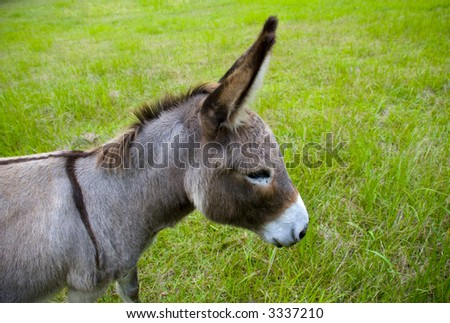 a cute grey brown donkey head with big ears in a green field - stock photo