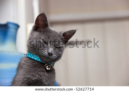 A cute grey kitten looking sleepy as he awakes from his cat-nap. Copyspace for your text/design. - stock photo