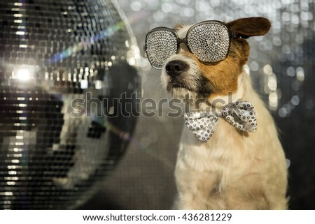 a cute jack russell dog with sparkle sunglasses in a disco setting