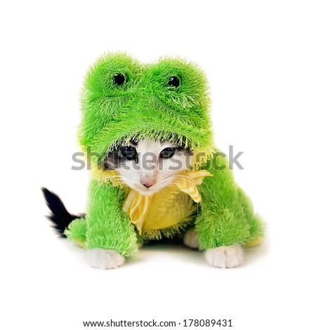 a cute kitten in a frog costume looking very mad - stock photo
