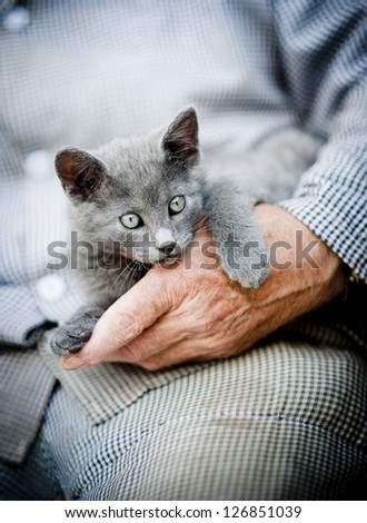 A cute little grey kitten is playing outside with human hands - stock photo