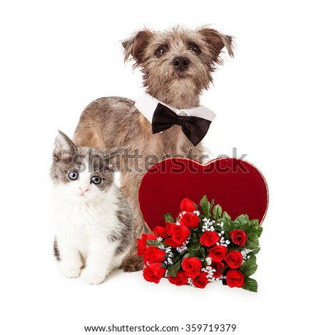 A cute little kitten and Terrier mixed breed dog together with a Valentine's Day candy heart and a dozen red roses - stock photo